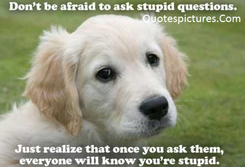 Animal Quotes - Do Not Be Afraid To Ask Stupid Questions