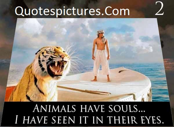 Animal Quotes - I Have Seen It In Their Eyes