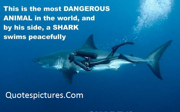 Animal Quotes - This Is The Most Dangerous Animal In The World