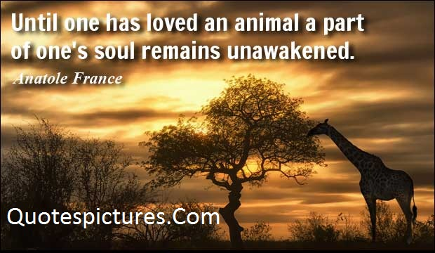 Animal Quotes - Until One Has Loved An Animal A Part By Anatone France