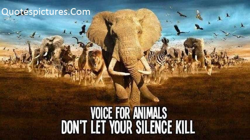 Animal Quotes - Voice For Animal