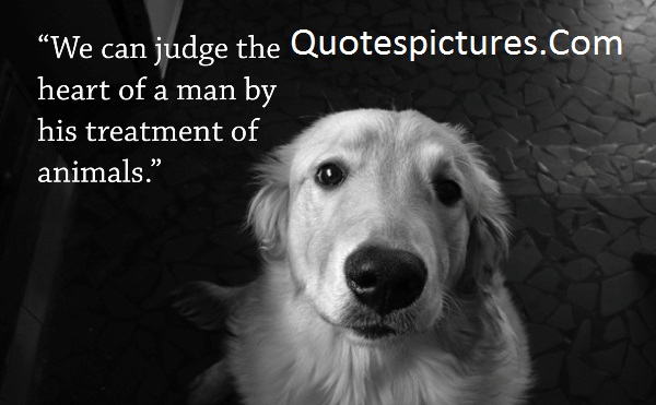 Animal Quotes - We Can jugde The Heart Of Man