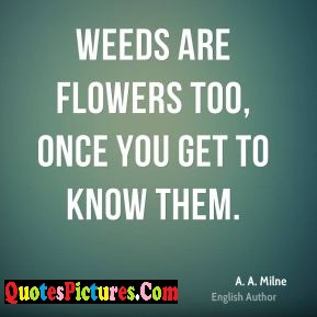 Best Flowers Quote - Weeds Are Flowers Too, once You Get To Know Them. - A.A Milne