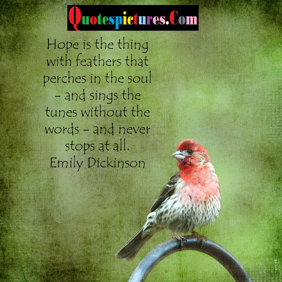 Birds Quotes Birds Quotes Pictures And Birds Quotes Images  3