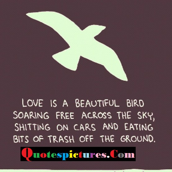 Birds Quotes - Love Is A Beautiful Bird Soaring Free Across the Sky