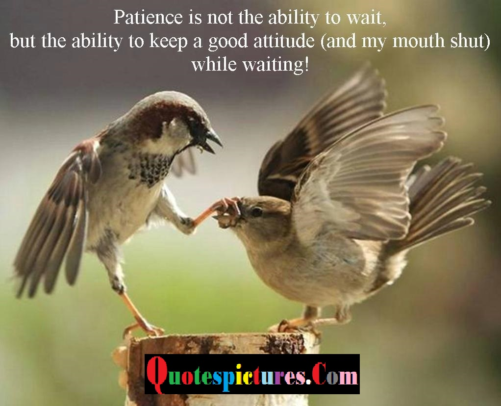 Birds Quotes - Patience Is Not The Ability To Wait
