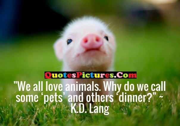 Brilliant Favourite Quote - We All Love Animals. Why Do We Call Some Pets And Others Dinner ! - K.D Lang