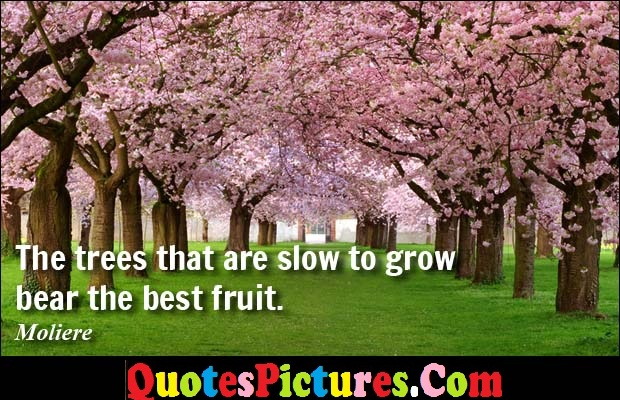 Brillient Environment Quote - The trees That Are Slow To Grow Bear The Best Fruit. - Moliere