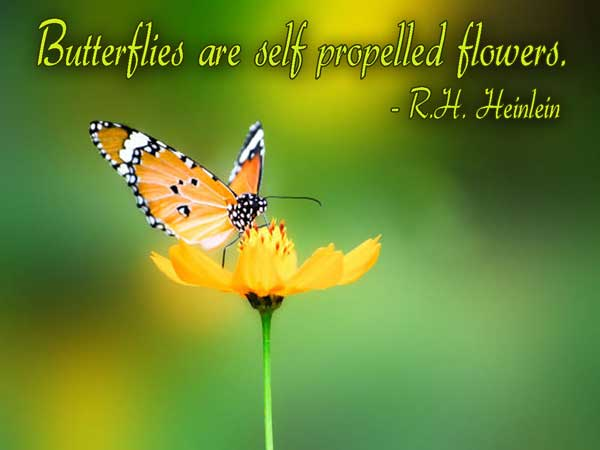 Butterfly Quotes - Butterflies Are Self Propelled Flowers By Rh Heinlein