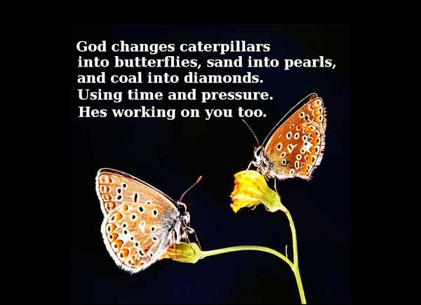 Butterfly Quotes - God Changes Caterpillars Into Butterflies