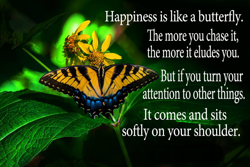 Butterfly Quotes - Happiness Is Like A Butterfly