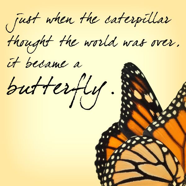 Butterfly Quotes - Just When The Caterpillar It Become A Butterfly