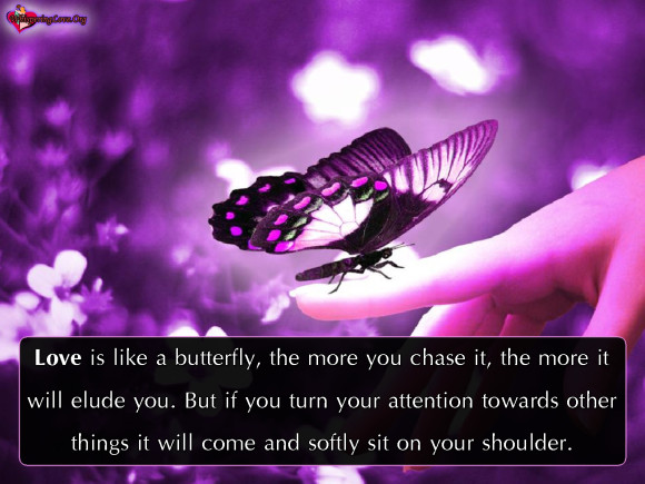 Butterfly Quotes - Love Is Like Butterfly The More You Chase It The More It Will Elude You