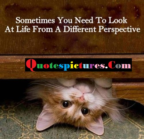 Cat Quotes - Sometimes You Need To Look At Life