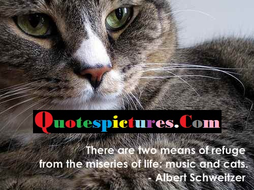Cat Quotes - The Miseries Of Life Music And Cats By Albert Schweitzer