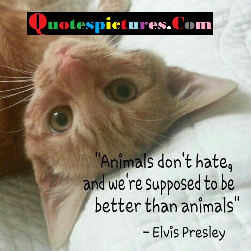 Cat Quotes - WE Are Supposed To Be Better Than Animals By Elvis Presley