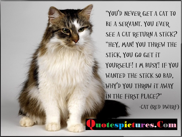 Cat Quotes - You  Need Never Get A Cat To Be  Servant By Red Dwarf
