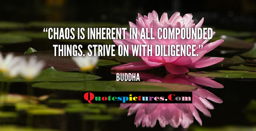 Chaos Quotes - Choas Is Inherent In All Compound Things By Buddha
