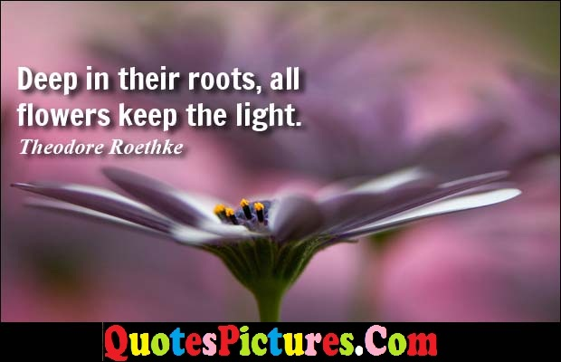 Fabulous Debt Quote - Deep In Their Roots, All Flowers Keep The Light. - Theodore Roethke