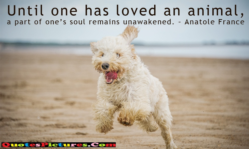 Fabulous Dog Quote - Until One Has Loved An Animals, A Part Of One's Soul Remians Unawakened. - Anatole France