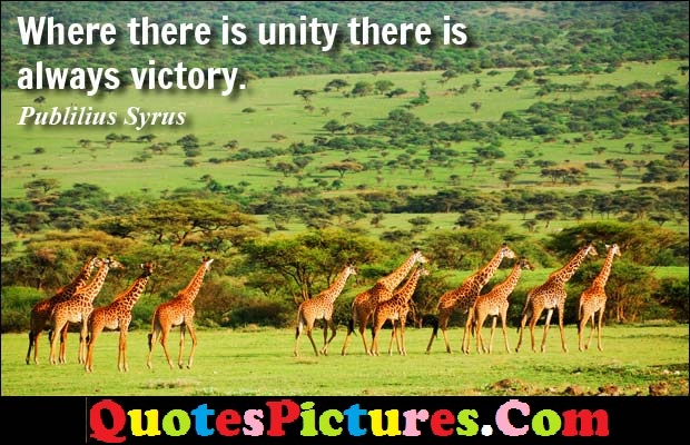 Family Quote - Where There Is Unity There Is Always Victory. - Publilius Syrus
