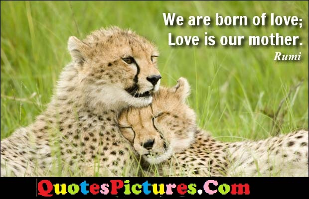 Mother Quote - We Are Born Of Love; Love is Our Mother. - Rumi