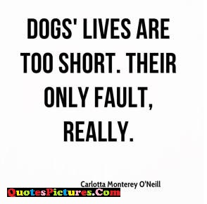 Motivational Dog Quote - Dogs Lives Are Too Short Their Only Fault, Really.