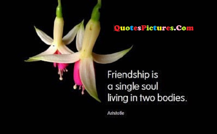 Nature Quote - Friendship Is A Single Soul Living In Two Bodies.