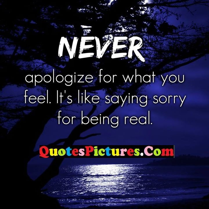 never apologize like sorry real