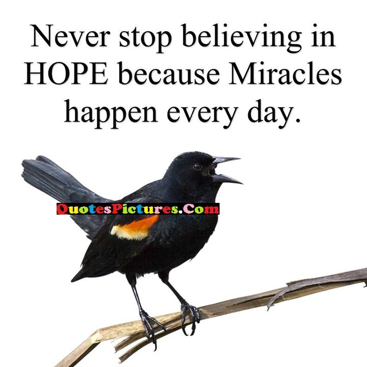 never hope miracles
