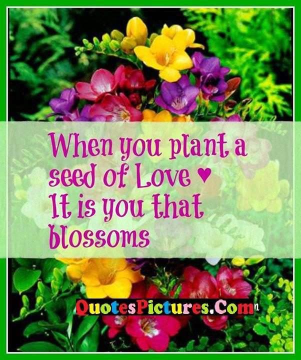 pland seed love blossoms