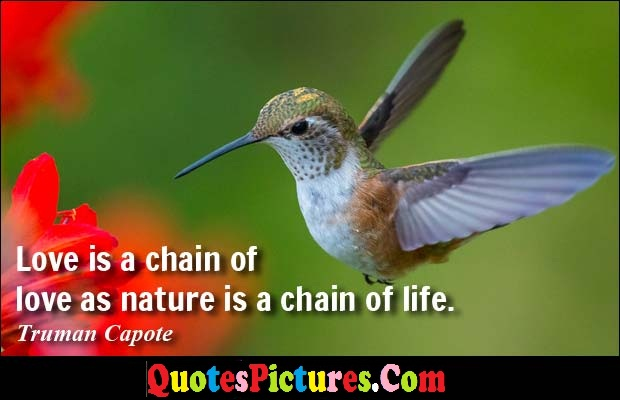 True Nature Quote - Love Is A Chain Of Love As nature Is A Chain Of Life. - Truman Capote