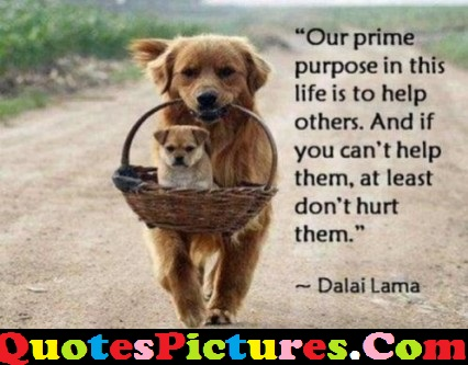 Wonderful Life Quote - Our Prime Purpose In This Life Is To Help Others
