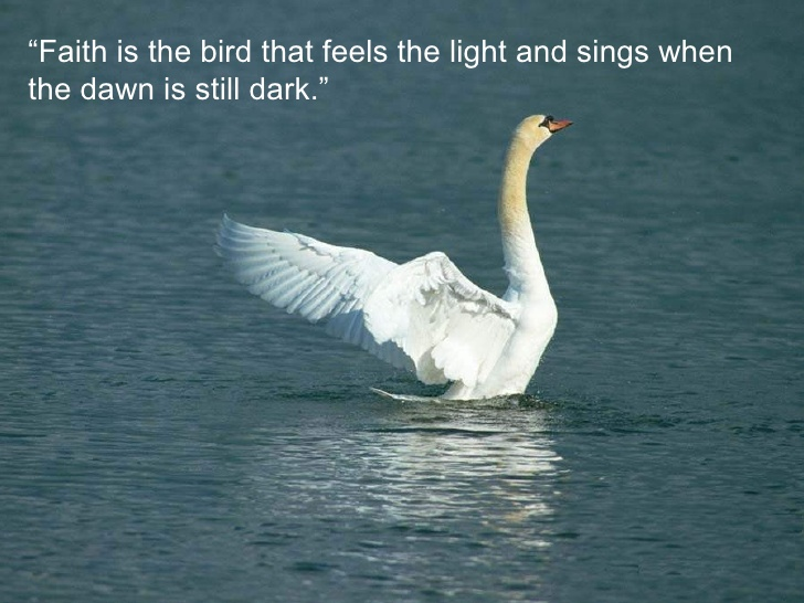 Birds Quotes And Birds Sayings Images