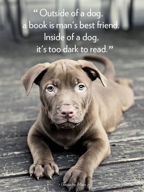 Dog Quotes And Dog Sayings Images